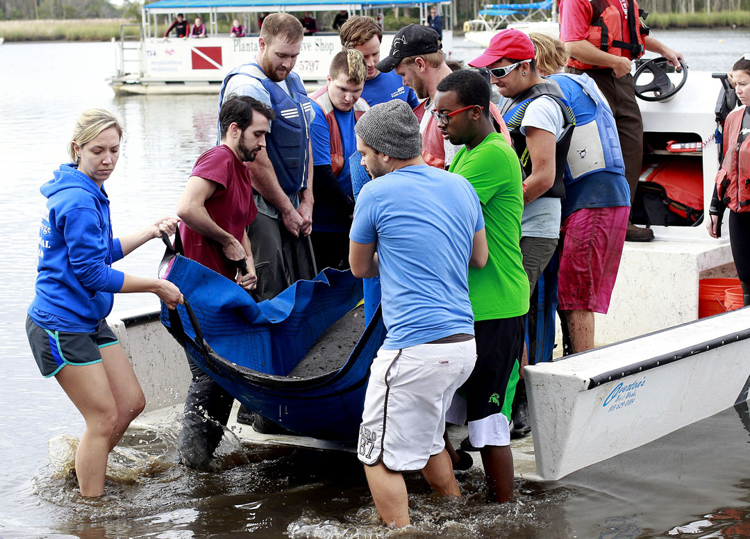 A crew unloads a manatee not the processing beach to be examined during the USGS manatee captures and health assessments on Wednesday, Dec. 9, 2015 in Crystal River, FL. A team of scientists, veterinarians and volunteers spent two days capturing manatees to gather health data. This was the 10th year of the assessments. The program monitors the status of the regional population of Florida manatees. Matt Stamey/Staff photographer