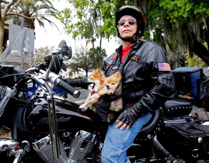 Biker Dogs